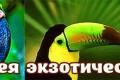 Оранжерея экзотических птиц
